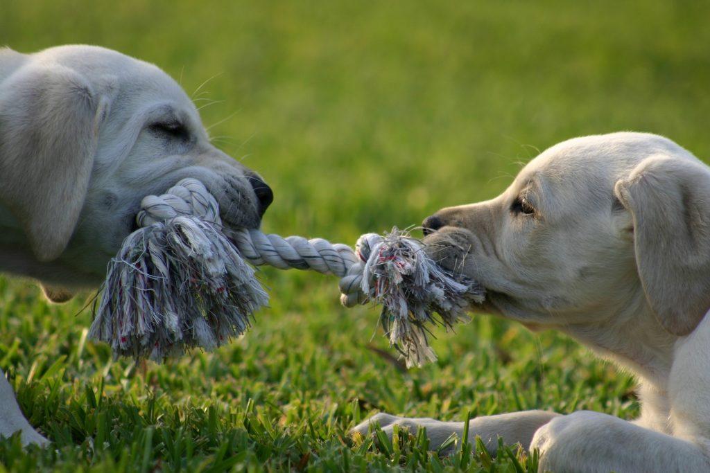puppy-1647692_1920-1024x683